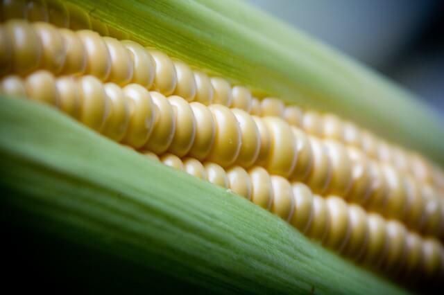 csemege kukorica