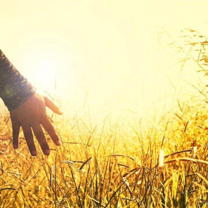 hands, grasses, sunset-2667461.jpg