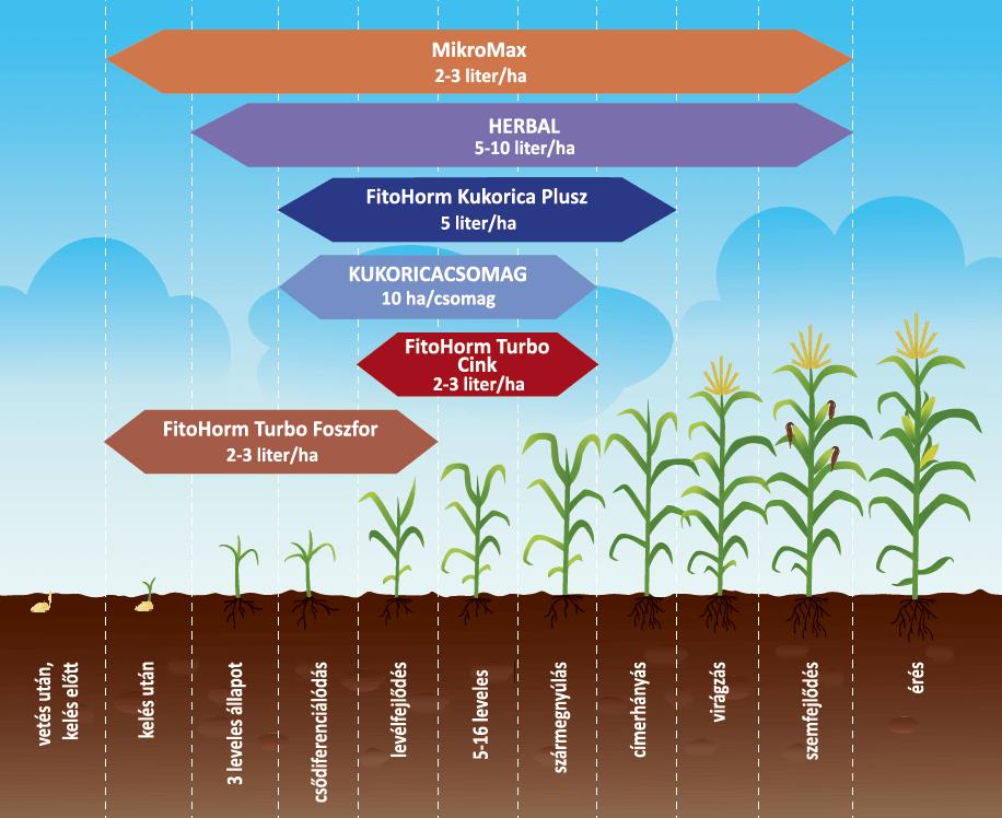 Fitohorm kukorica kijuttatási javaslataink